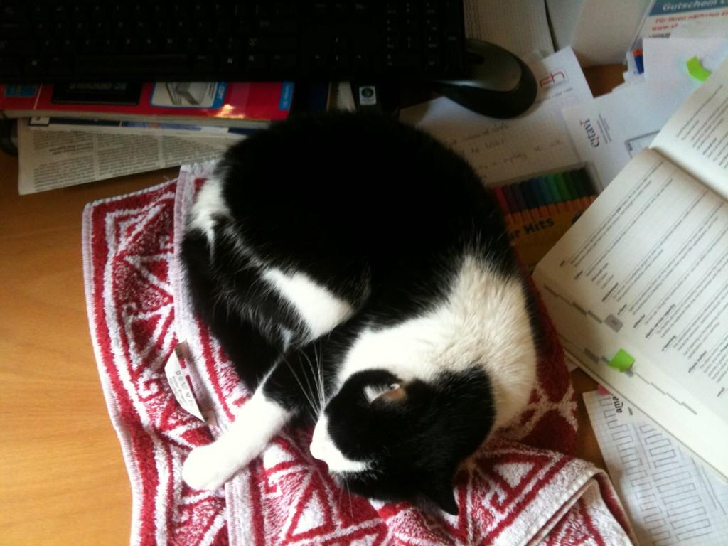 Citavi Büro-Katze