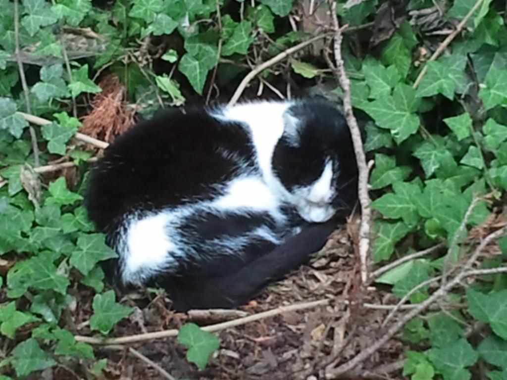 Citavi Büro-Katze - Katze im Urlaub